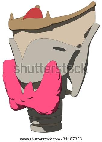larynx anatomy - stock vector