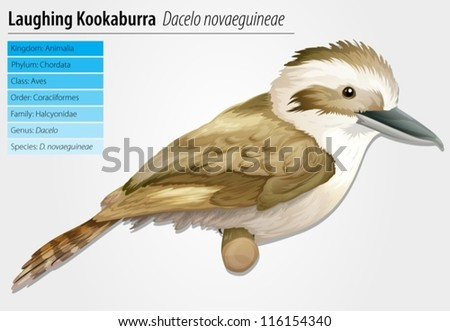 Laughing Kookaburra - Dacelo novaeguineae - stock vector