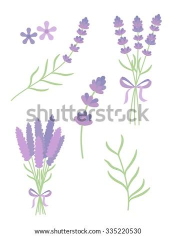 lavender flat vector set - stock vector