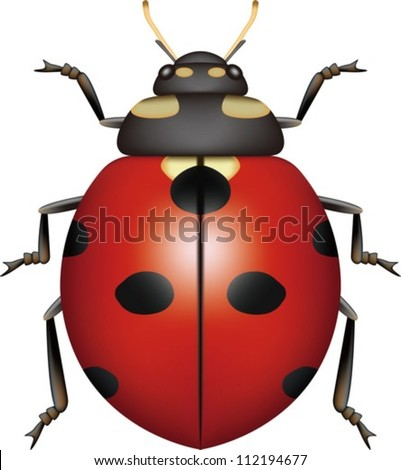 Layered Vector Illustration Of Ladybug.