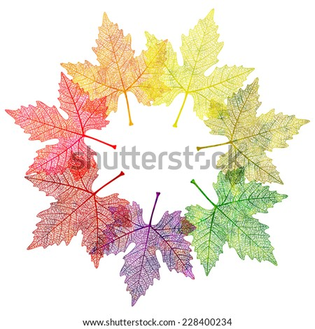 Leaf abstract background. Vector illustration, EPS 10. - stock vector