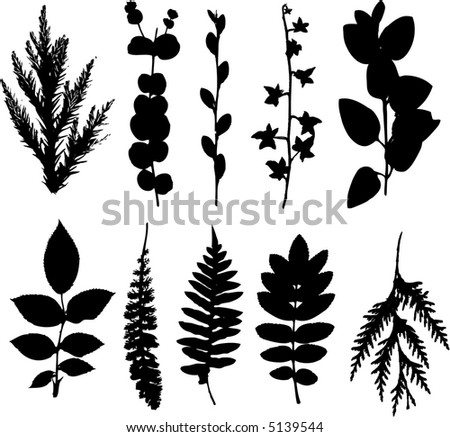 leaf collection including deciduous and coniferous plants - stock vector