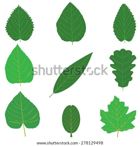 leaf different icons