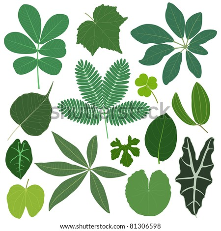 leaf leaves plant tropical - stock vector
