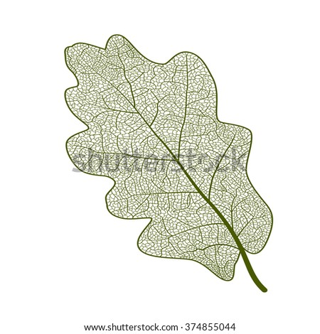 Leaf oak, isolated. Vector illustration. EPS 10 - stock vector