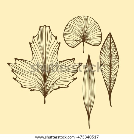Leaf skeletons vector set. isolated on background