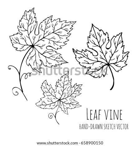 Leaf Vine Hand Drawn Vector Doodle Floral Sketch Illustration For Adult Coloring Books
