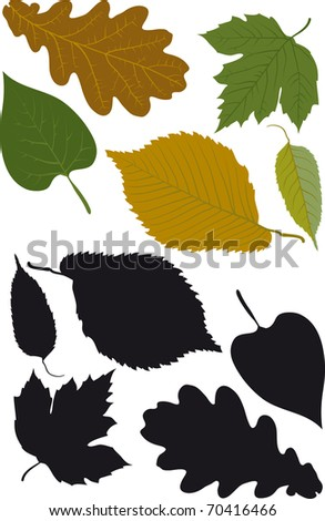 Leaves - stock vector
