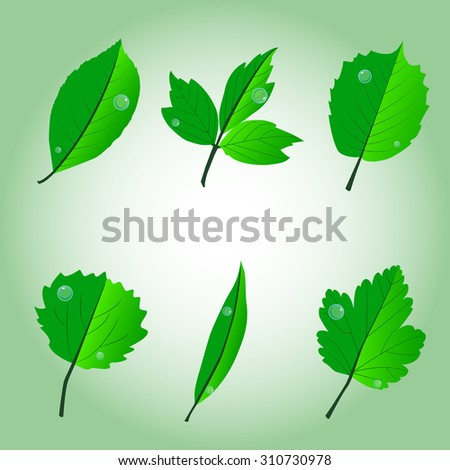 leaves - ash, cherry, willow, hazel, poplar, currant