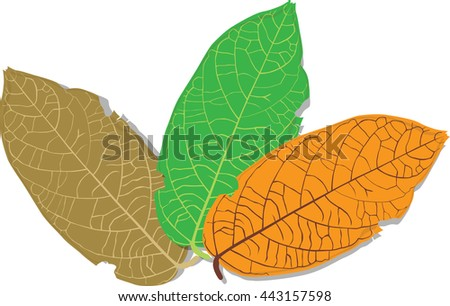 Leaves,forest,green,Brown,Orange,object