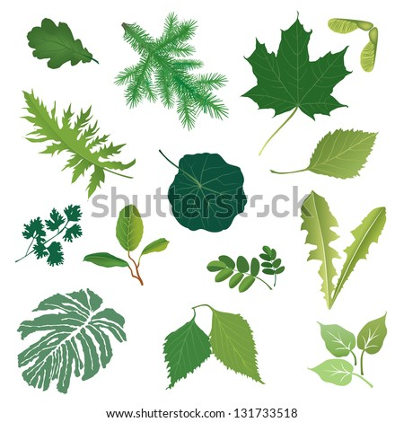 Leaves icon vector set. Summer nature decor. - stock vector