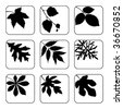 Leaves in black and white - stock vector