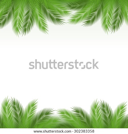 Leaves of palm tree on white background as a template. Vector illustration. - stock vector