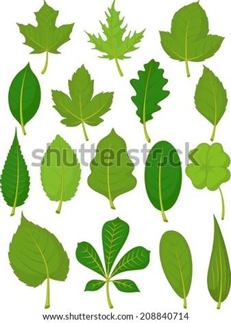 Leaves Set - Green Leaves - stock vector