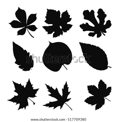 Leaves set, vector