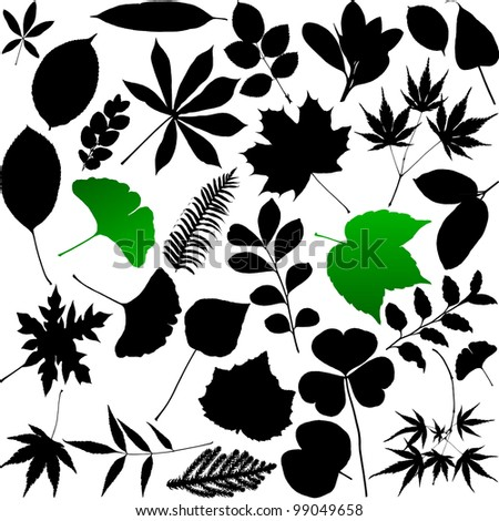 Leaves silhouette - stock vector