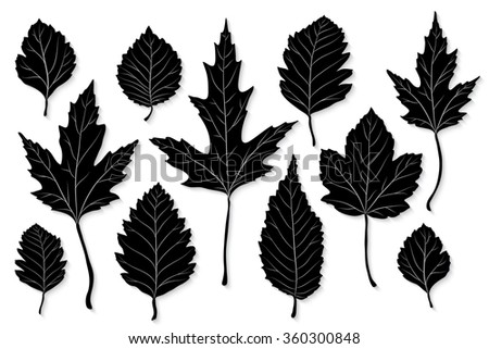 Leaves silhouette vector set - stock vector