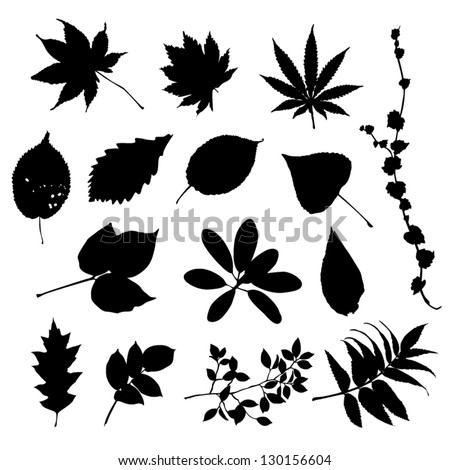 Leaves silhouettes - stock vector