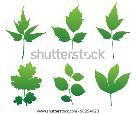 Leaves silhouettes set for design vector format.