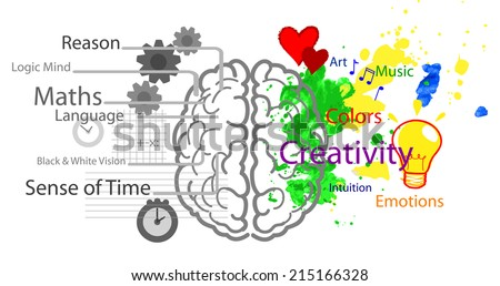 Left and right brain hemispheres with functions  - stock vector
