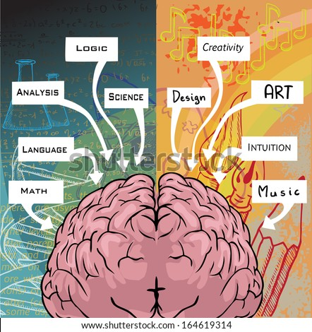 Left and right side of the brain, logic and creativity, vector illustration - stock vector