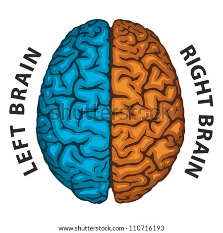 Right Brain Stock Images, Royalty-Free Images & Vectors   Shutterstock