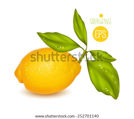 Lemon. Citrus isolated on white background, beautiful fresh fruit. Vector realistic illustration for advertising, packaging carton, bottle, banner, wallpaper. - stock vector