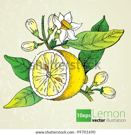 Lemon flowers & leaf set in retro style - stock vector