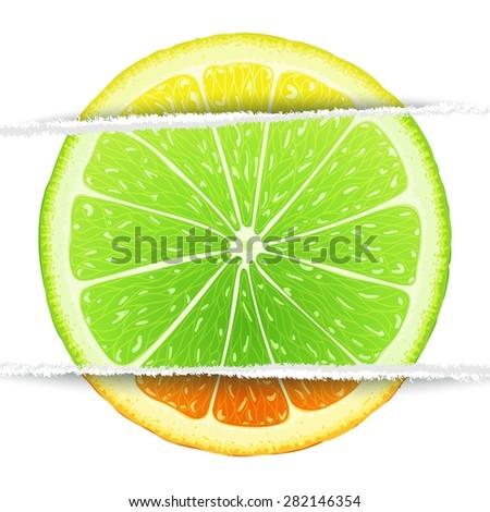 Lemon, lime and orange slices mixed in the original paper version. Triple citrus  design elements - stock vector