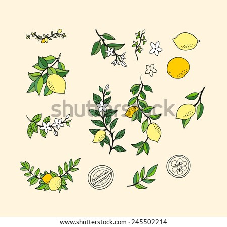 Lemon set - stock vector