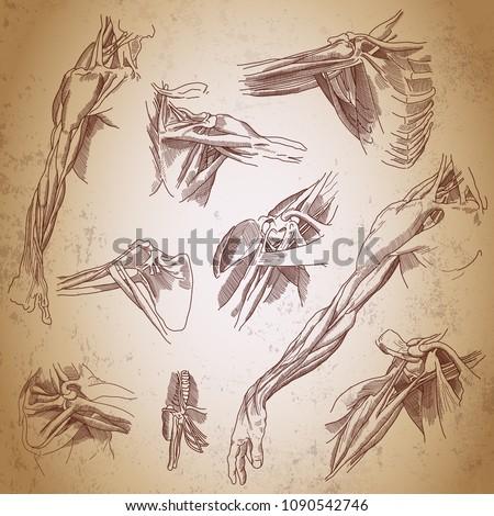 Leonardo Da Vinci Sketches Three Studies Stock Vector 1090542746 ...