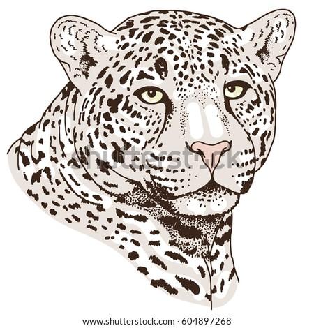 leopard face clip art - photo #23