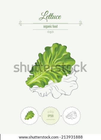 Lettuce. Banner with illustration of vegetables, organic food icons and beautiful frames. Realistic vector illustration with a sketch.  - stock vector