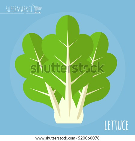 Lettuce.  Long shadow flat design vector icon.