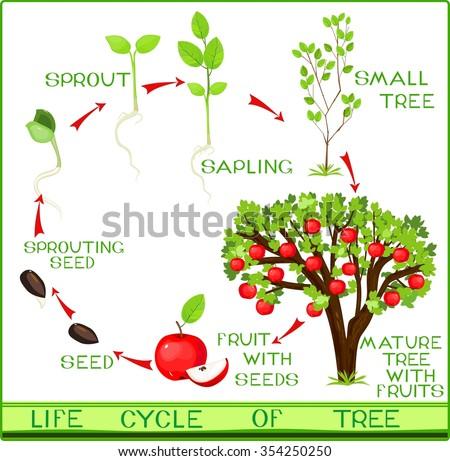 Tree+of+life on Lima Bean Clipart Worksheet Kindergarten