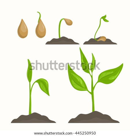 Life cycle of plant evolution from seed to green sprout. Phases of vegetable growth. Detailed vector illustration. Isolated elements on light beige background. - stock vector