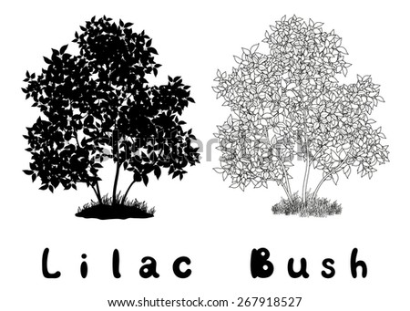 Lilac Bush with Leaves and Grass Black Silhouette, Contours and Inscriptions Isolated on White Background. Vector