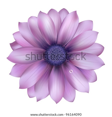 Lilac Flower With Water Drop - stock vector