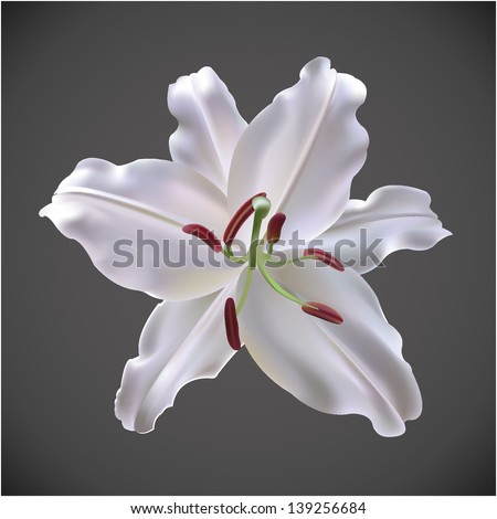 lily - stock vector