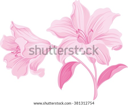 Lily flowers. Blooming lily. Card or floral background with blooming lilies flowers.  Silhouette of lily flowers  isolated on white background. Vector illustration. - stock vector
