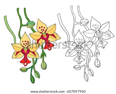 Line Contour For Coloring Book Page With Flower Of Orchid