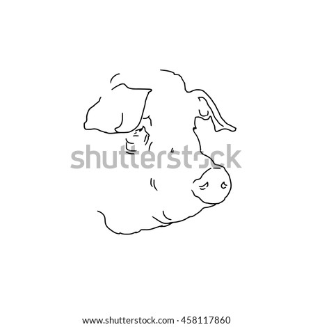 Linear illustration of a pig. Hand drawn pig.
