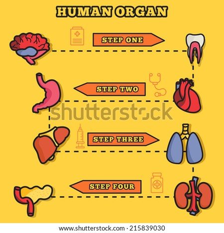 lines style human organs set icons concept infographic with ribbon. vector illustration design - stock vector