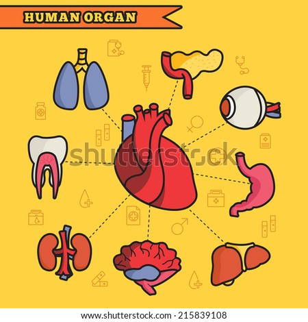 lines style human organs set icons concept. vector illustration design - stock vector