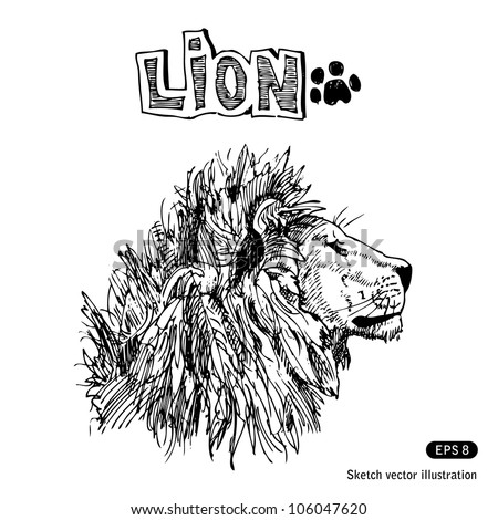 Lion. Hand drawn sketch illustration isolated on white background - stock vector