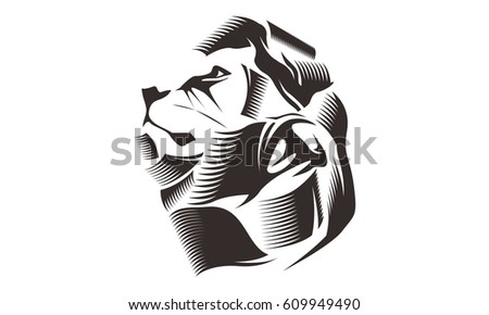 Line Drawing Lion Head : Lion head line art drawing illustration stock vector hd royalty
