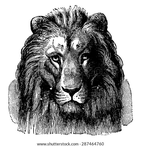 Lion head of Sennar, front view, vintage engraved illustration. Earth before man- 1886. - stock vector