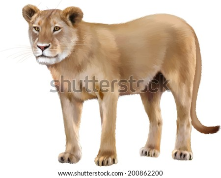 Lioness - Panthera leo, side view, Vecrtor. in front of a white background - stock vector