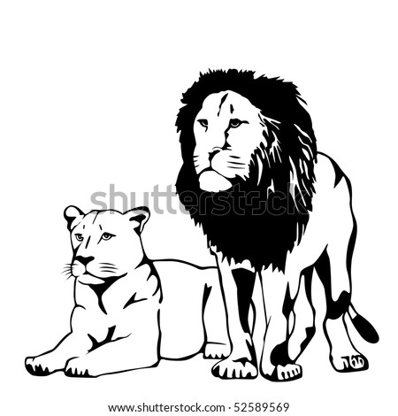 lions vector illustration - stock vector