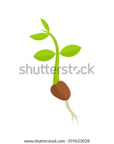Little plant seedling germination. Vector illustration - stock vector